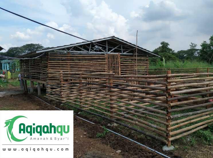 kandang kambing aqiqahqu di Tangerang