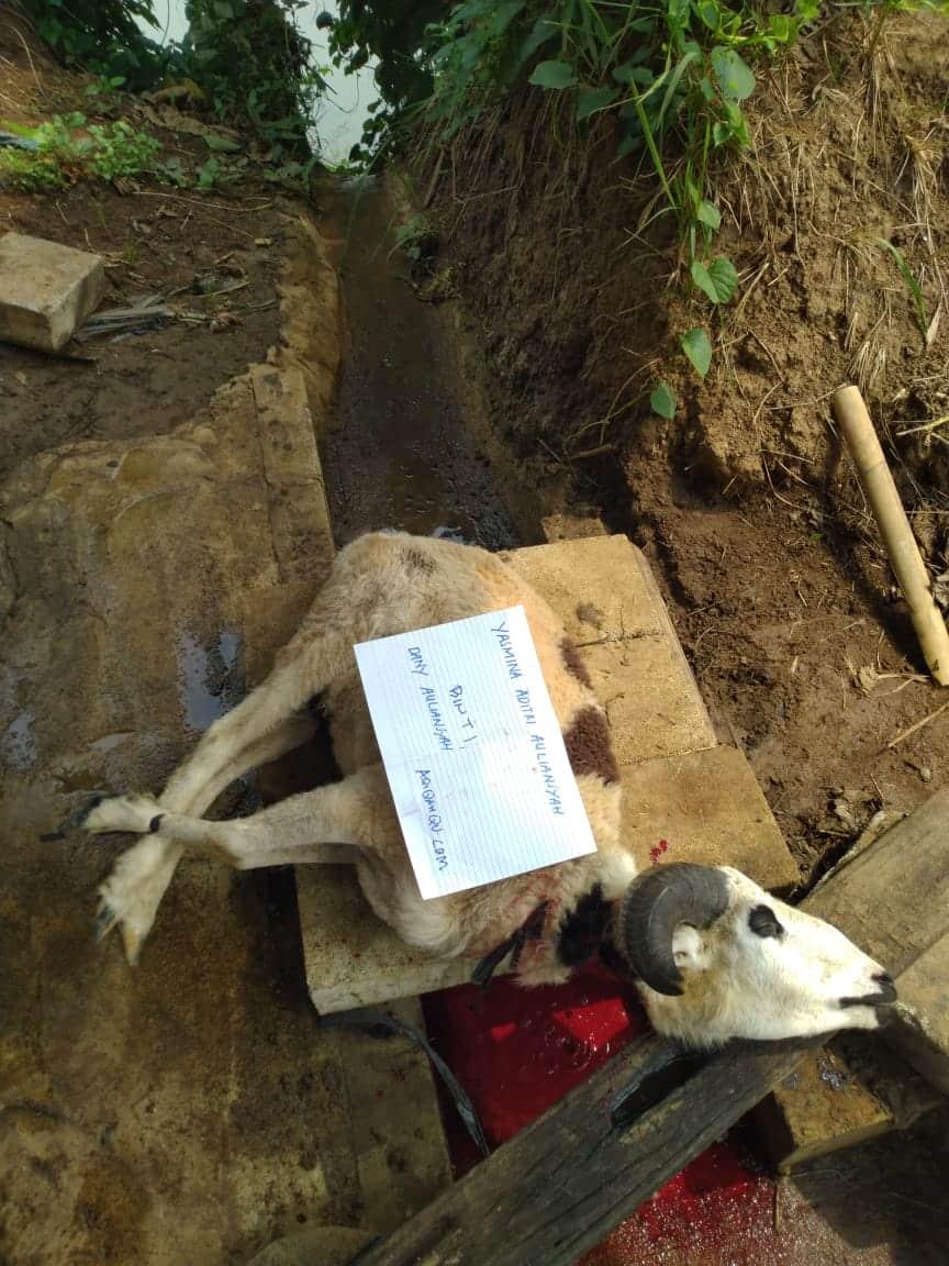 proses dokumentasi pemotongan hewan aqiqah